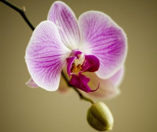 cropped-orchid-22159_640.jpg
