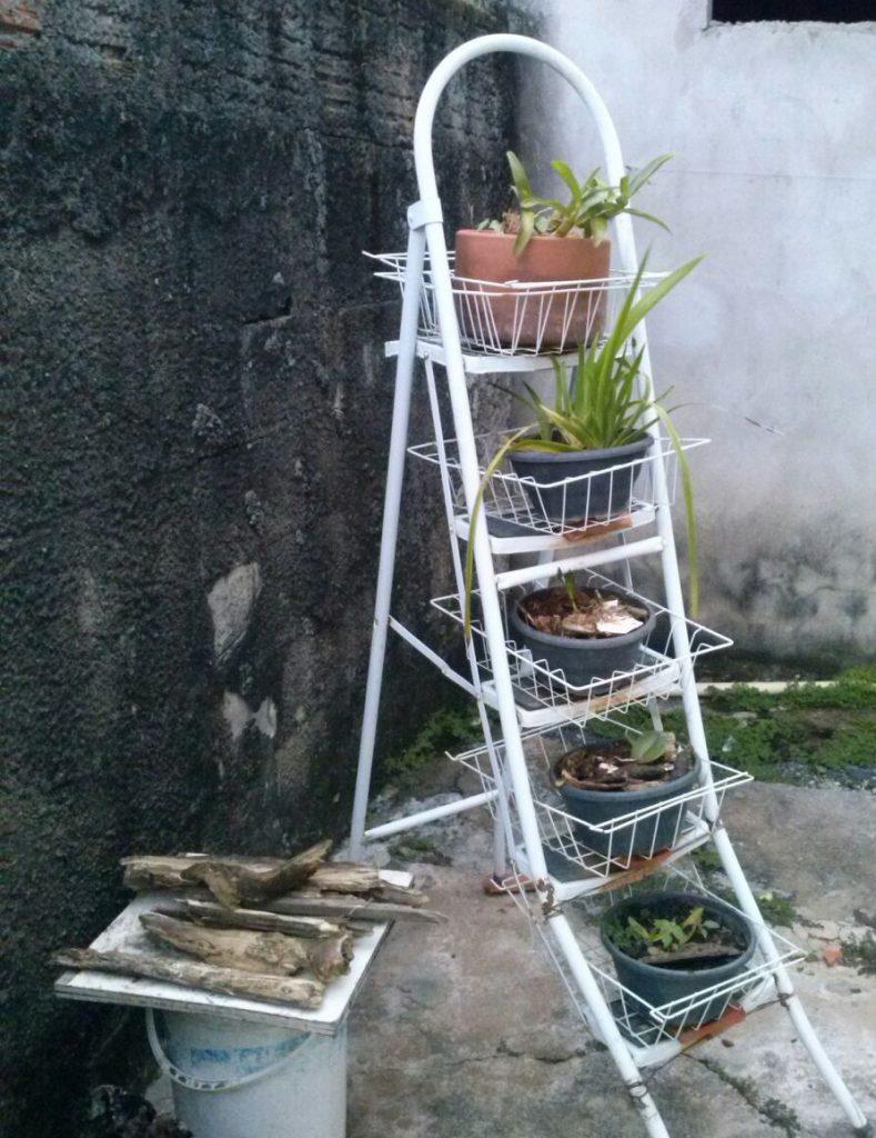 Orquídeas agrupadas em Escada
