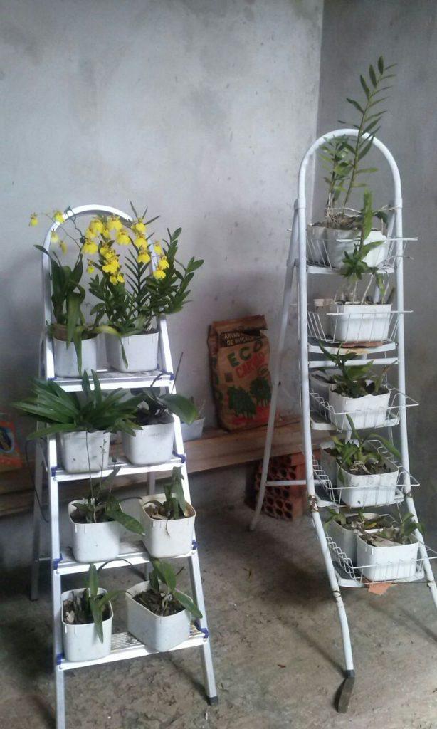 Orquídeas na Escada