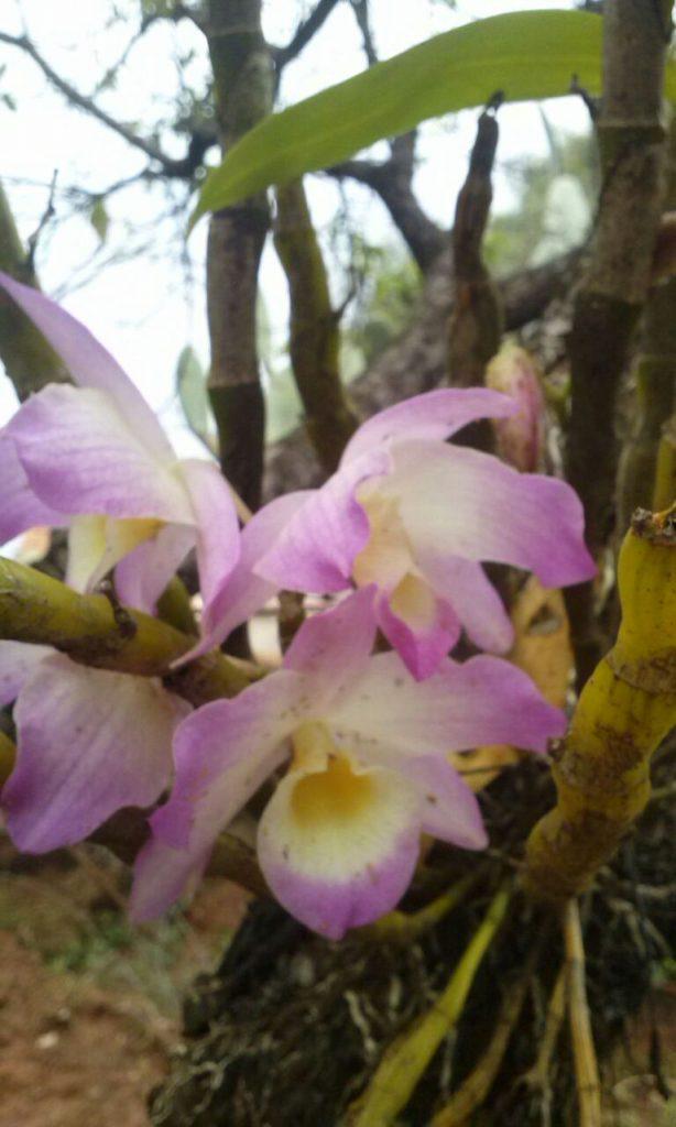 Flores salvas dos pulgões