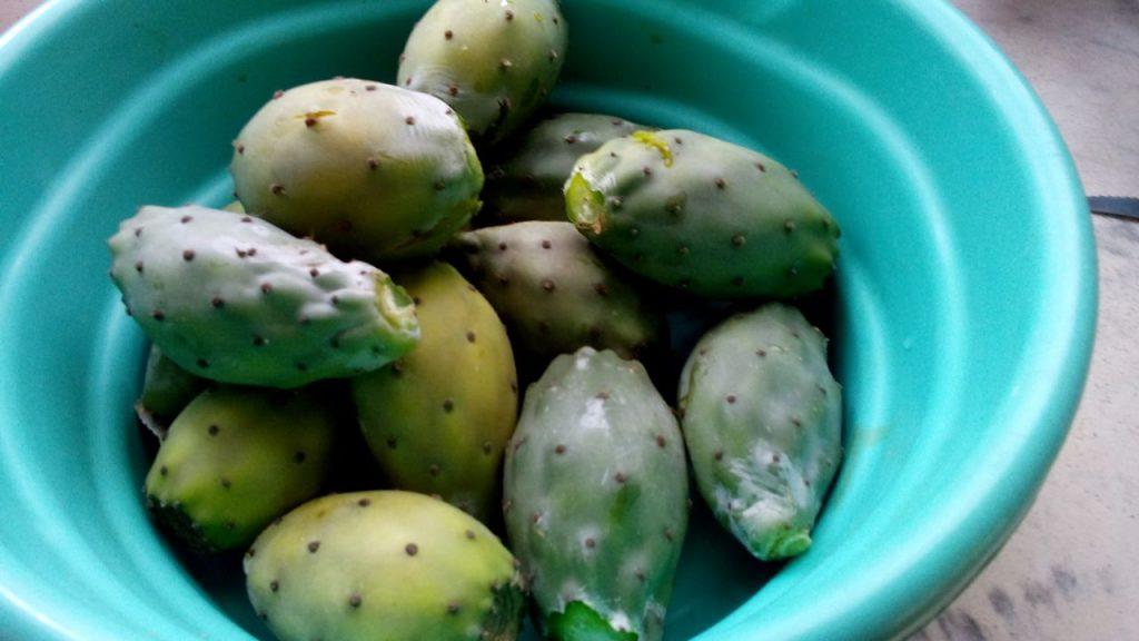 figo da india Frutas
