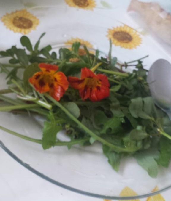 Capuchinhas -Salada Pancs