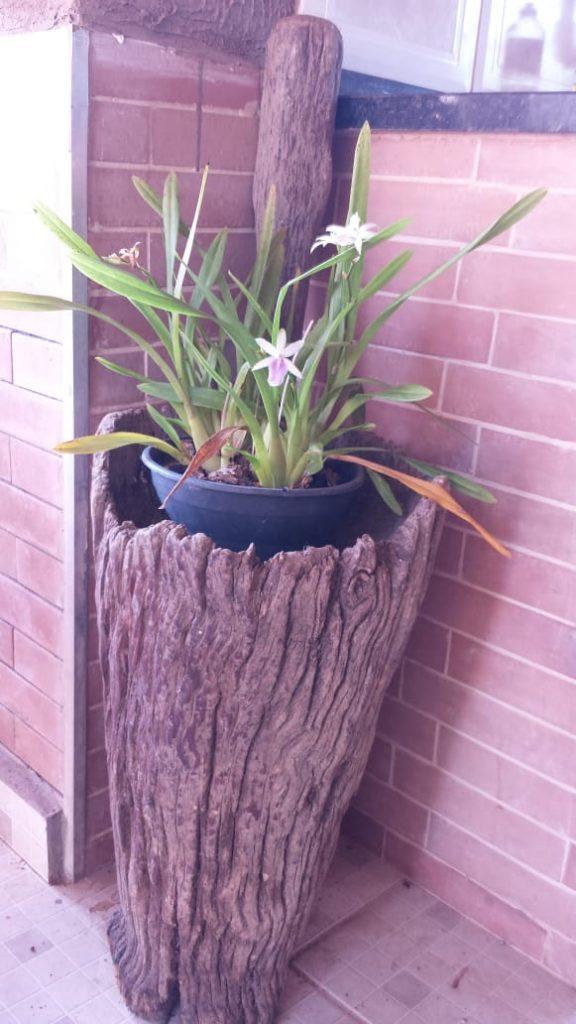 Orquídea no Pilão